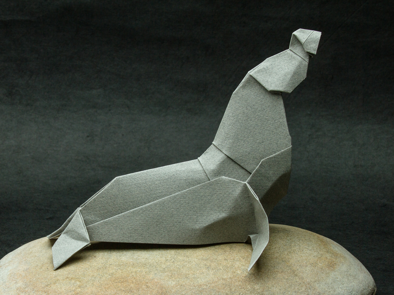 Zing origami arctic marine animals photo by bob plotkin all rights reserved elephant seal 2010 jeuxipadfo Gallery